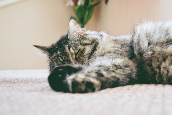Advice on what to do with your cat at night | Cats Protection
