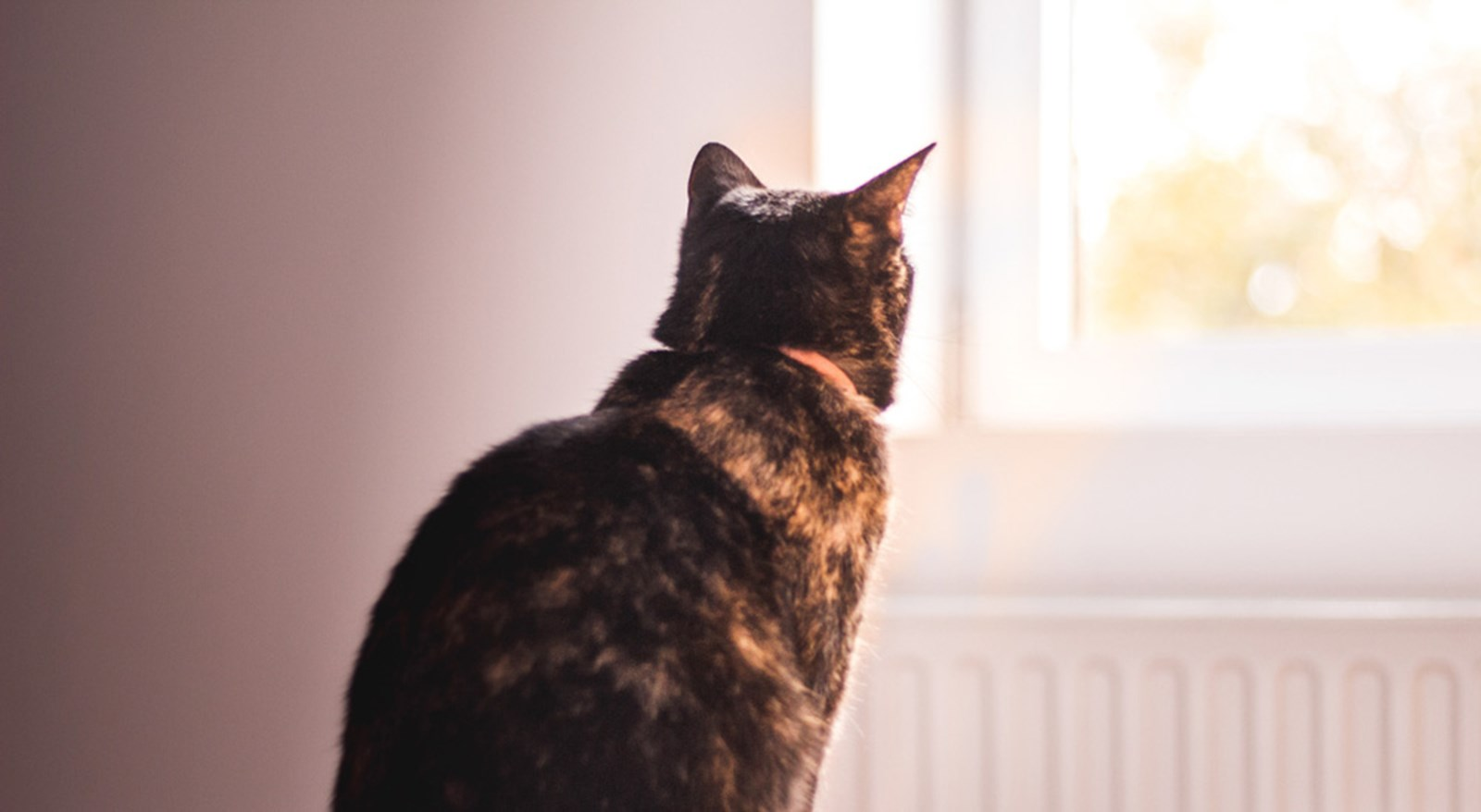 brown cat standing in front of radiator looking out of window