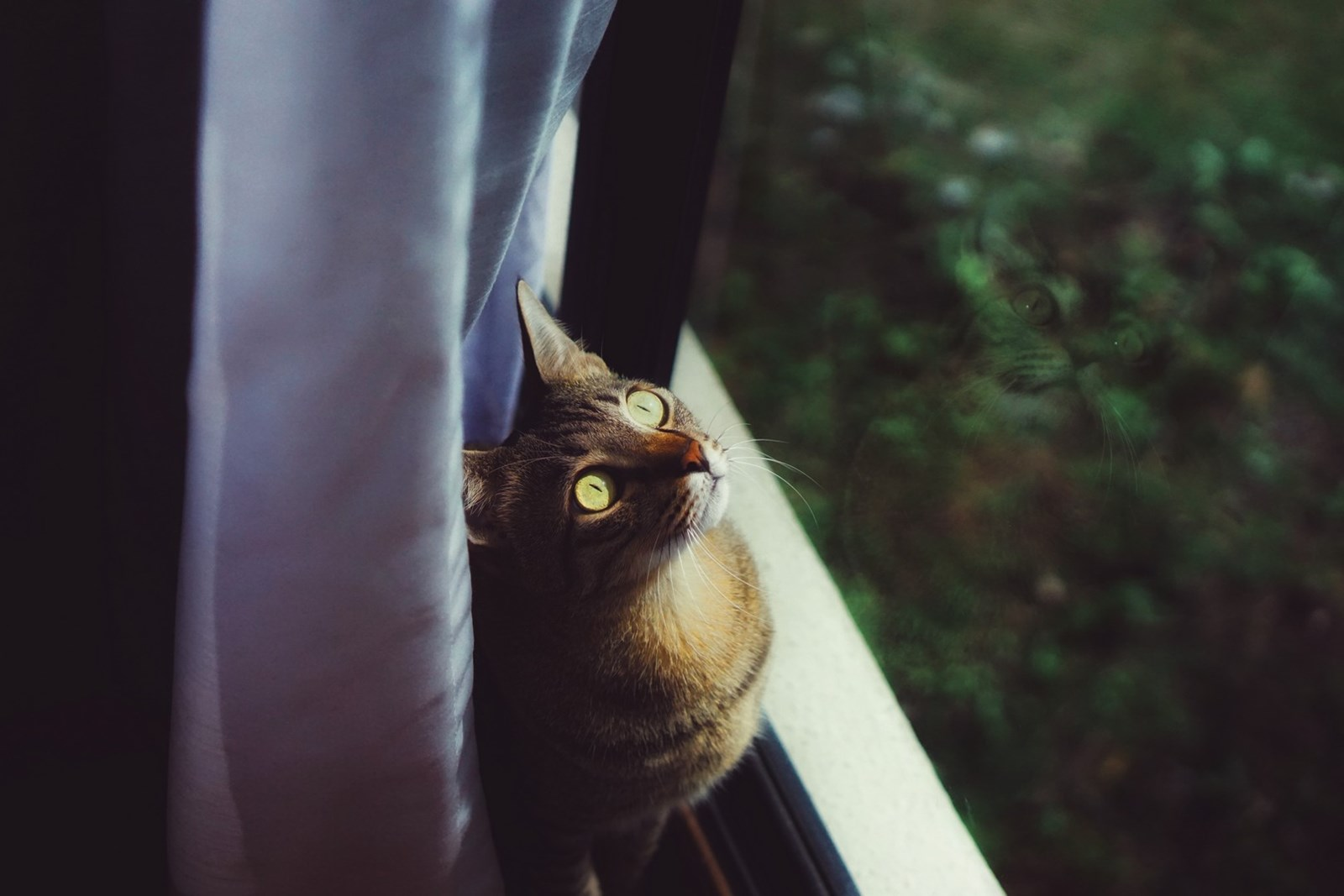 brown cat with bright green eyes staring out of window