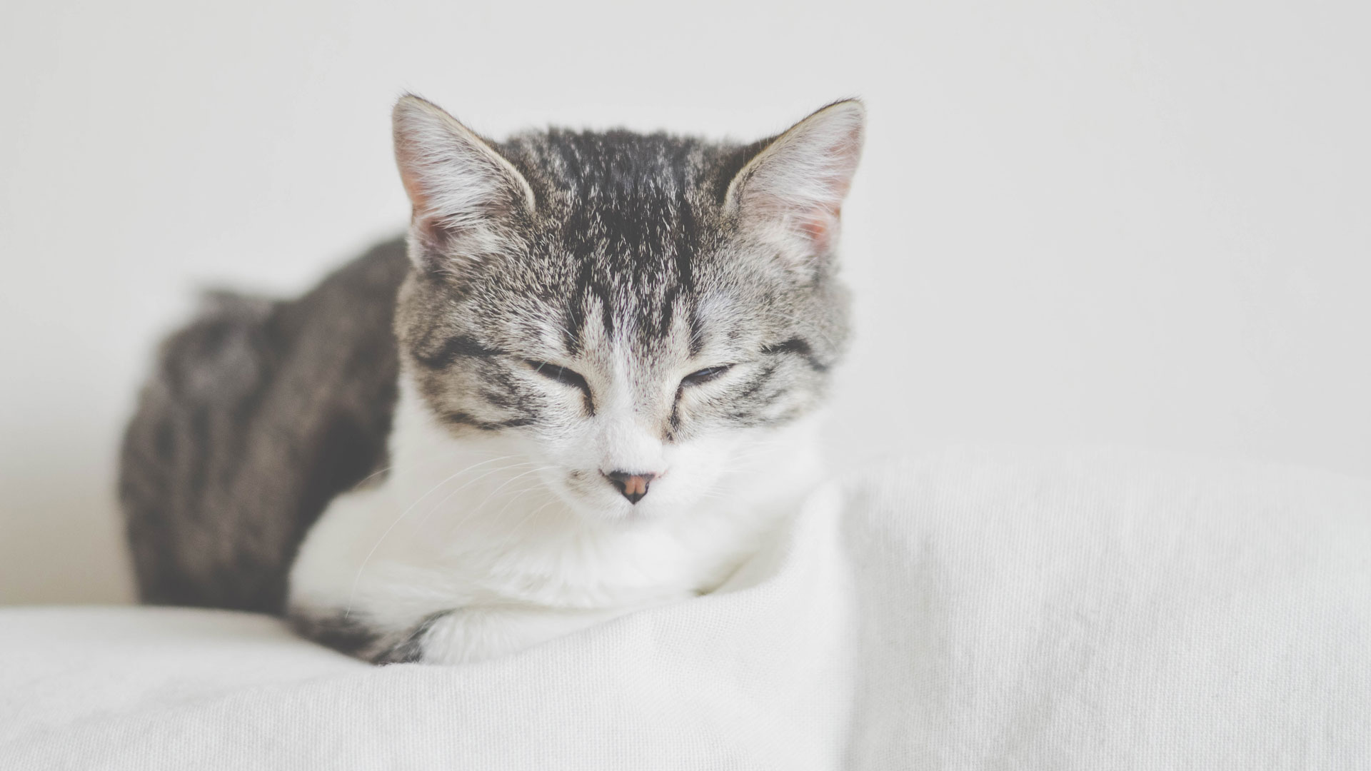 Shy Cats - How to Help Your Cat Relax | Cats Protection