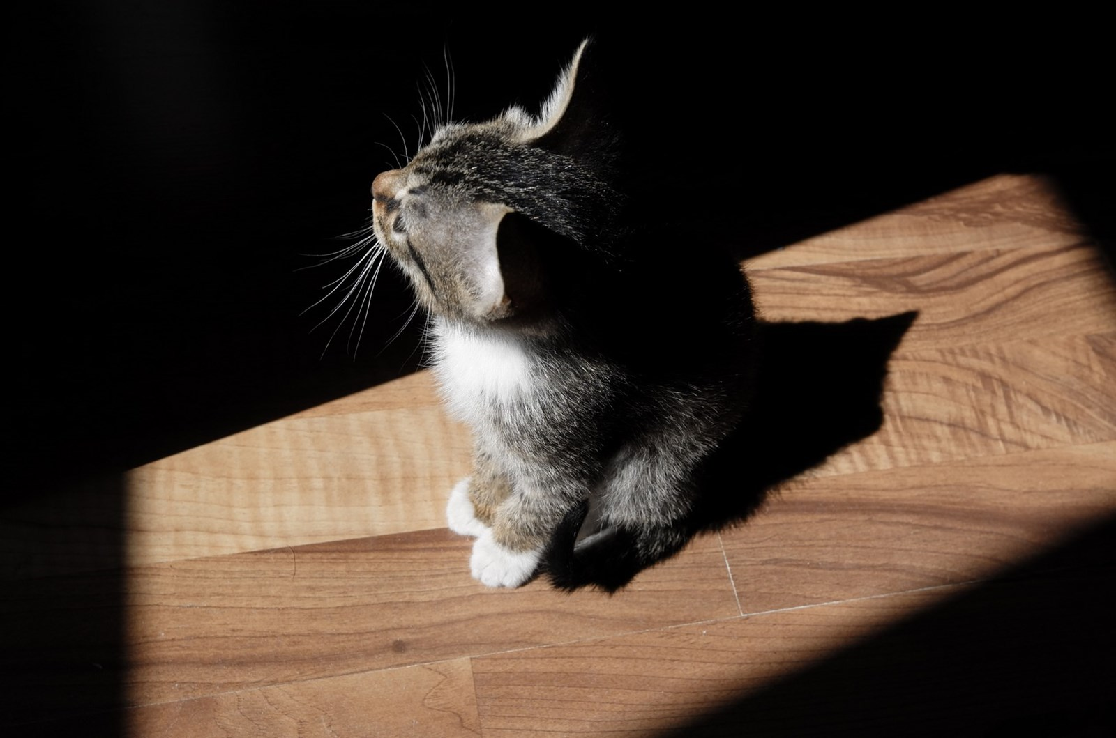 cat standing on wooden play looking away