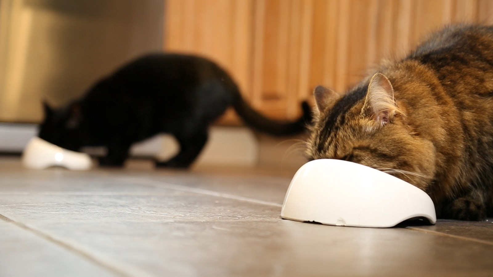 Quick Guide To Cat Diet And Needs Cats Protection