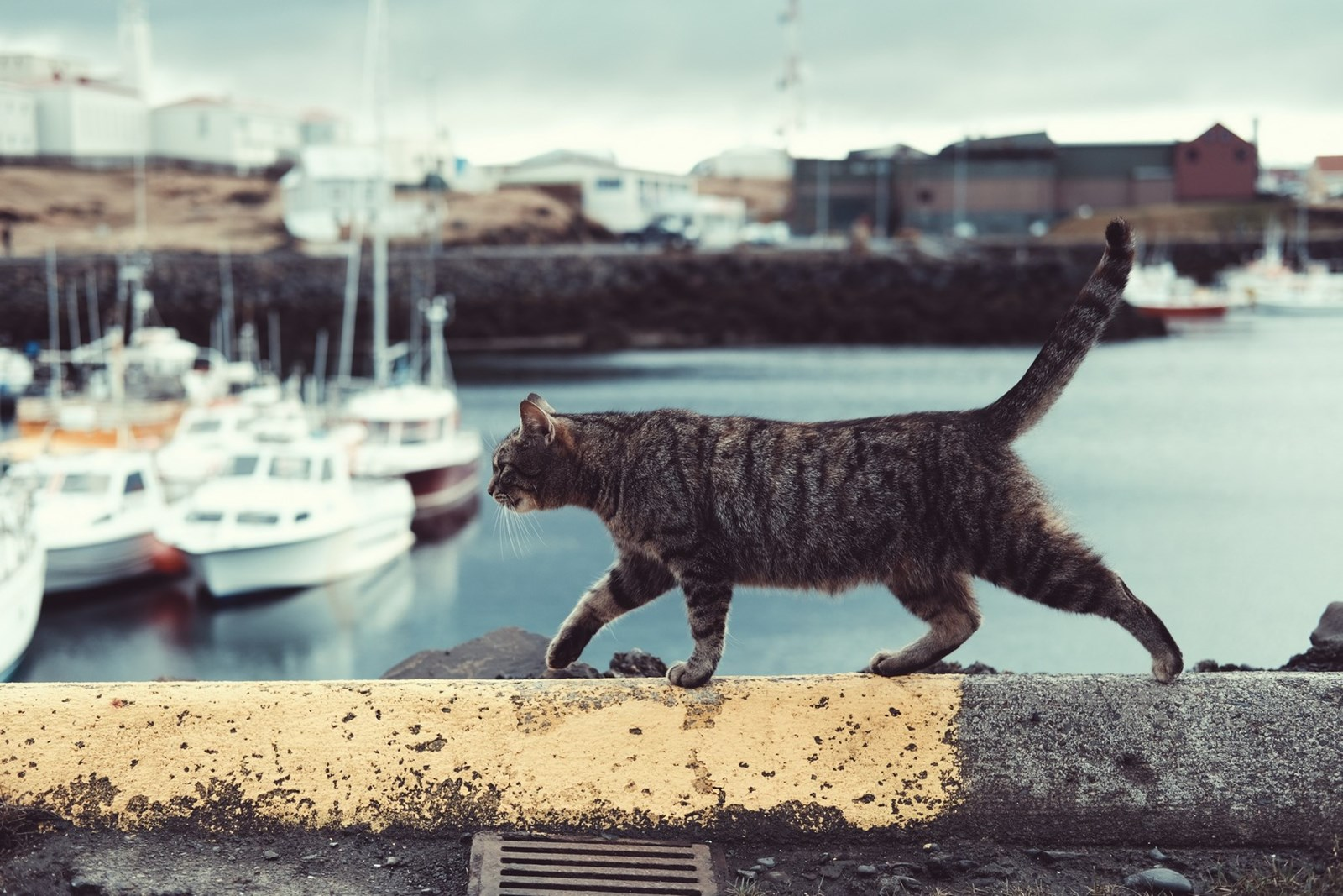 cat walking on sea front