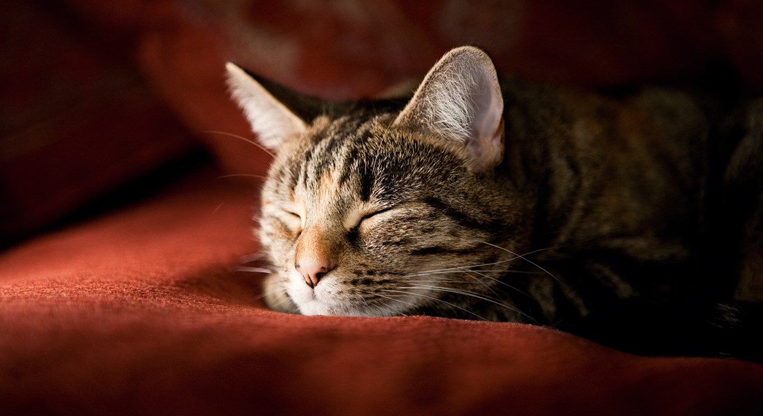 Caring For Elderly Cats Help Advice Cats Protection