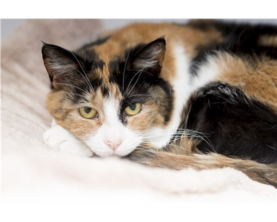 Caring for Elderly Cats - Help & Advice | Cats Protection