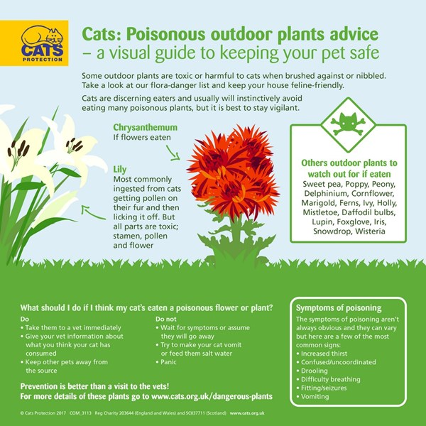 Plants Poisonous To Cats Our Guide Cats Protection