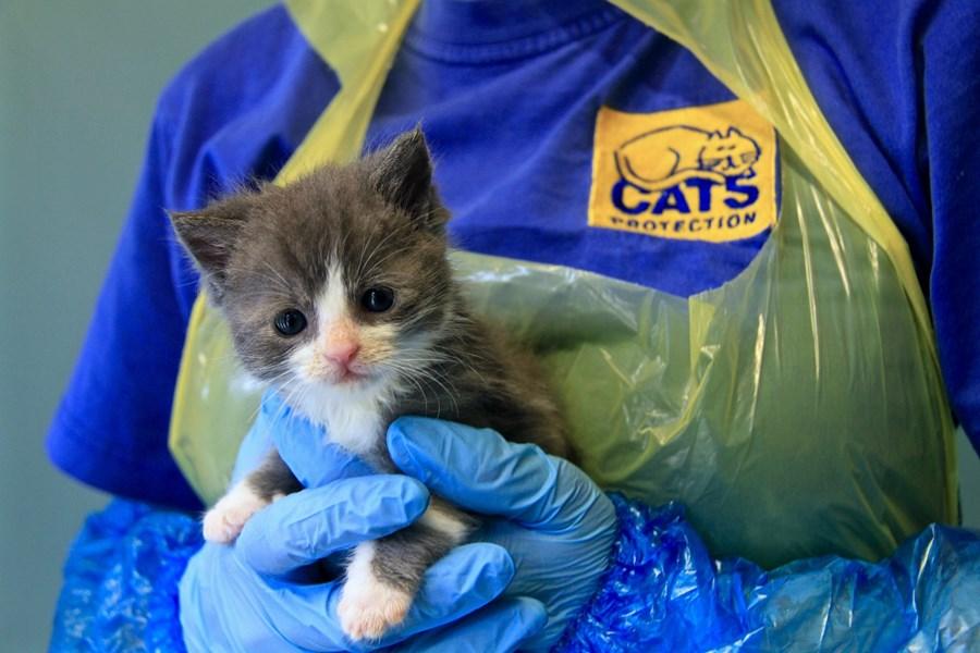 Care Of Newborn Kittens Kitten Advice Cats Protection