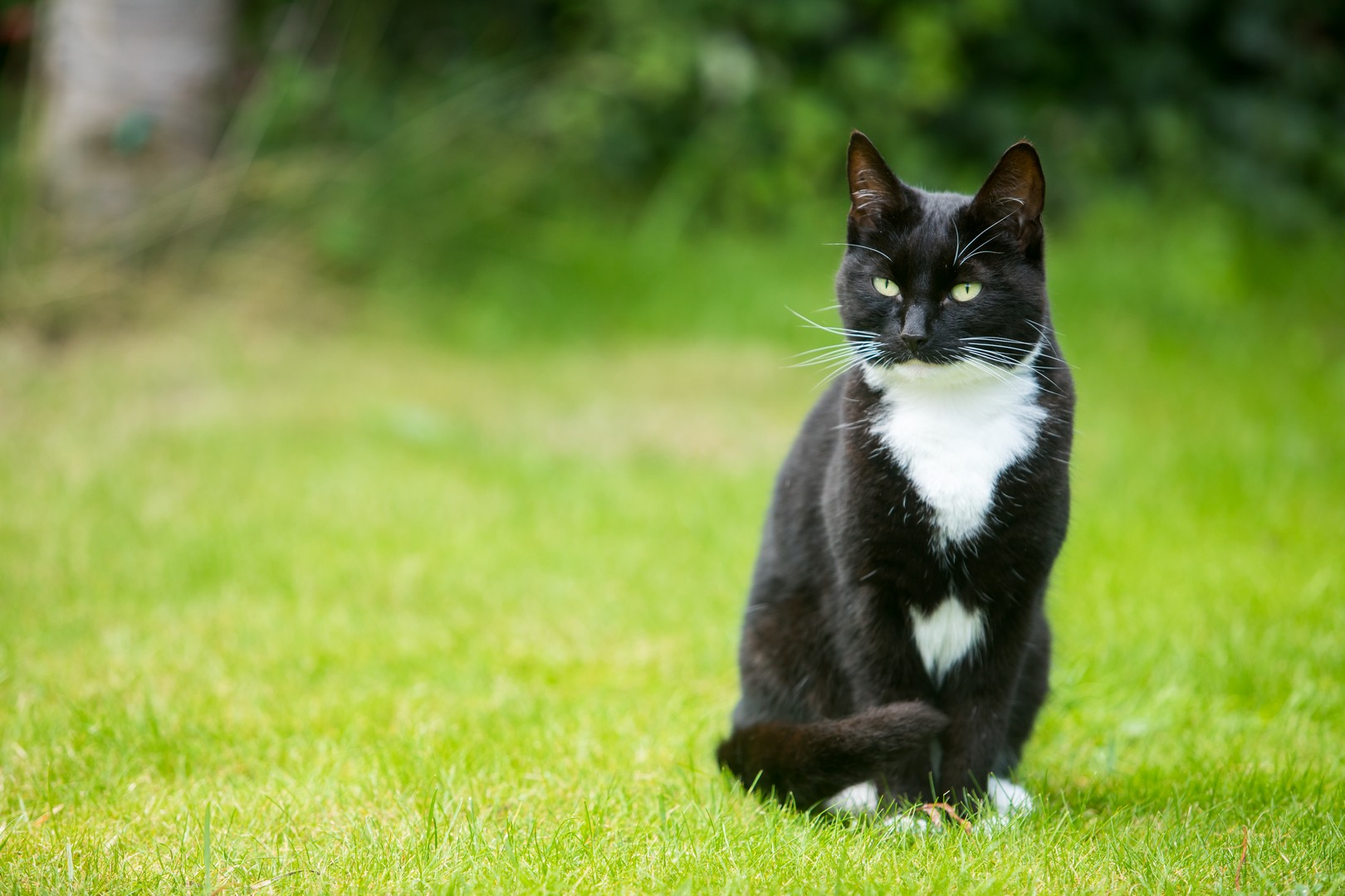 Keeping Cats Safe Outside , Our Guide