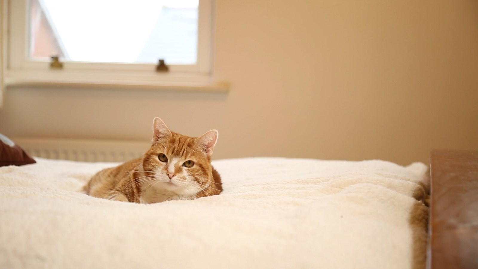 Ginger Cat on Bed