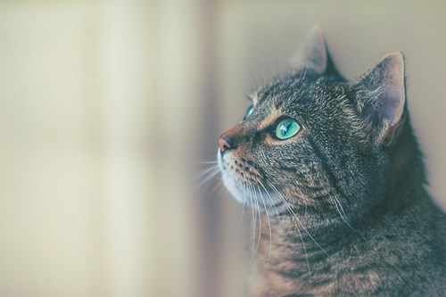 Cat Poisoning Symptoms and How to Spot It | Cats Protection