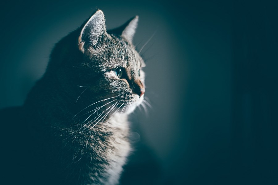 What To Do If You Find a Dead Cat - Our Advice   Cats Protection