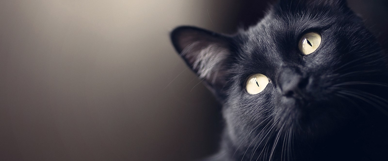 NBCD Homepage Banner Black Cat