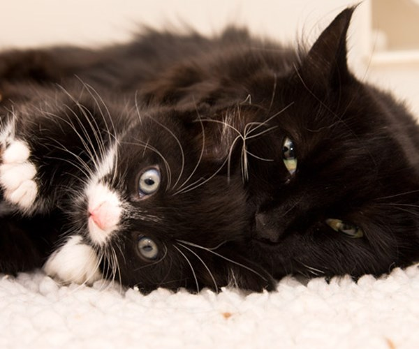 Facts And Figures Cats Protection