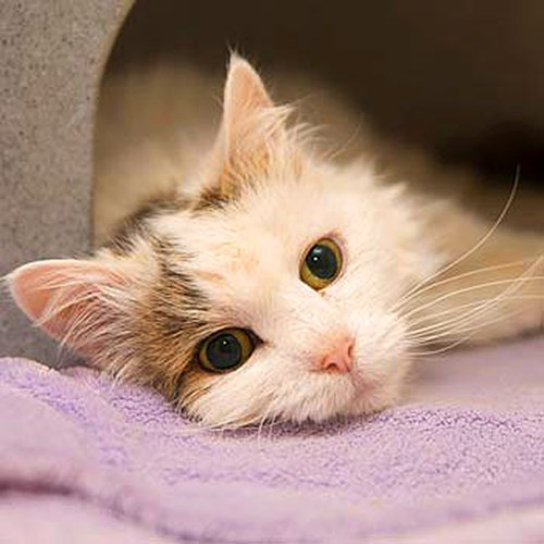 Libby The Miracle Kitten Charity Christmas Video Cats Protection