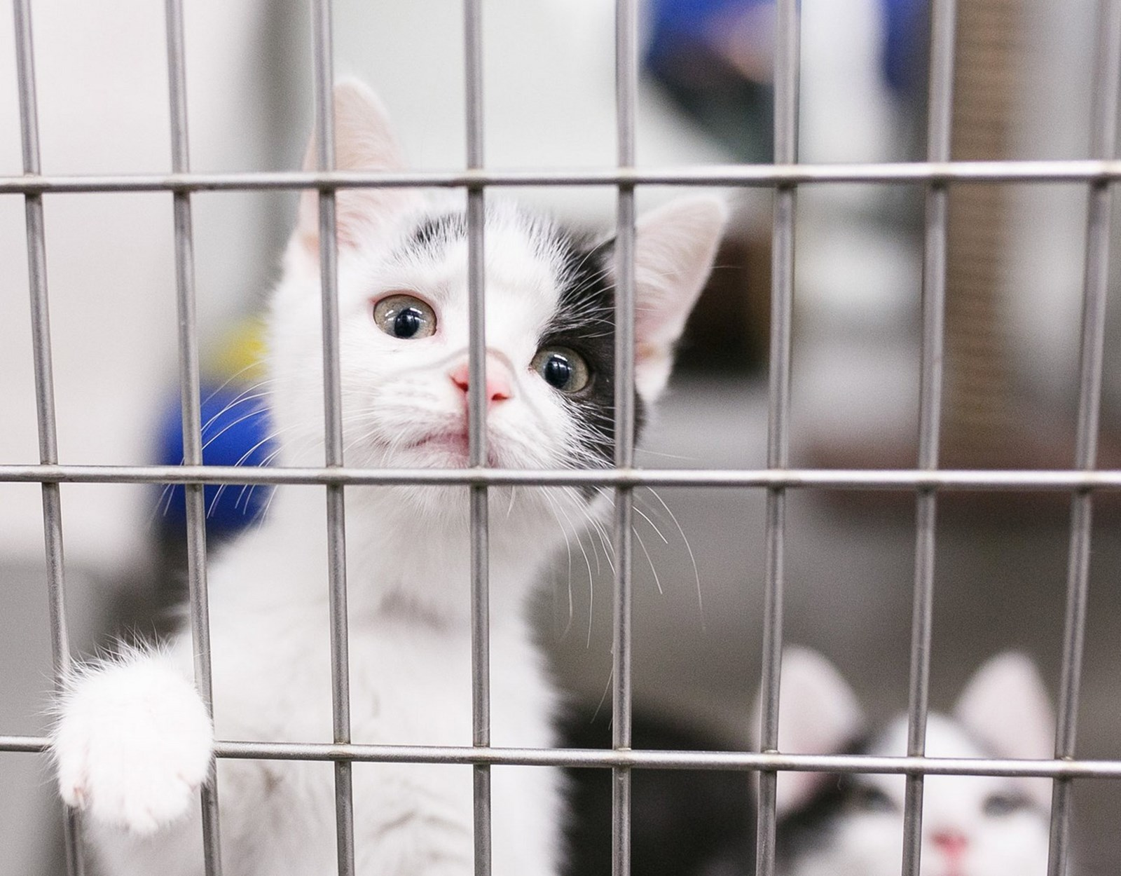 white and black kitten in a cage