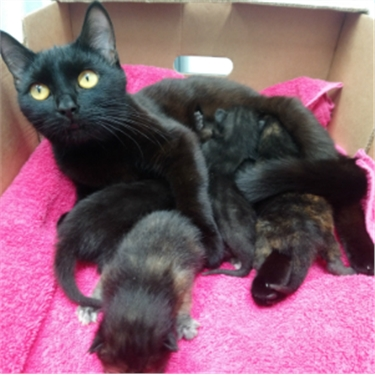 Black cat with kittens found in a mushroom box