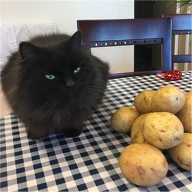Black cat with some potatoes
