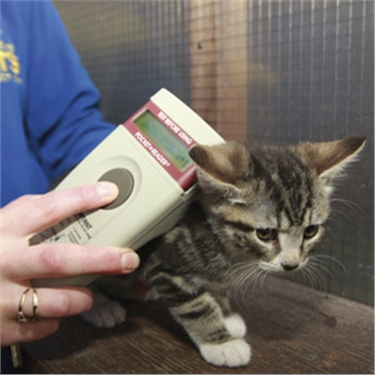 Kitten being scanned for a microchip