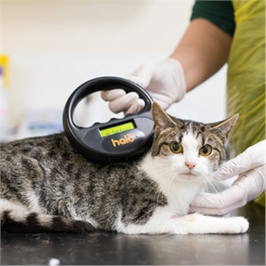 Tabby cat being scanned for a microchip