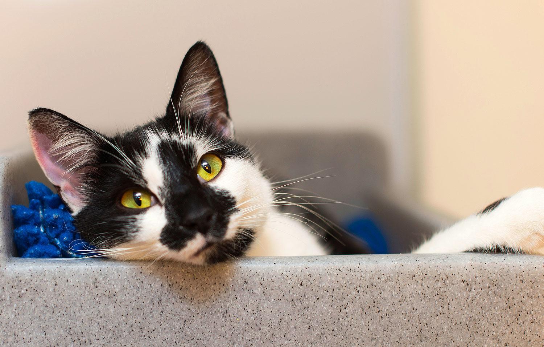 Bradford 5 Neutering Campaign Cats Protection