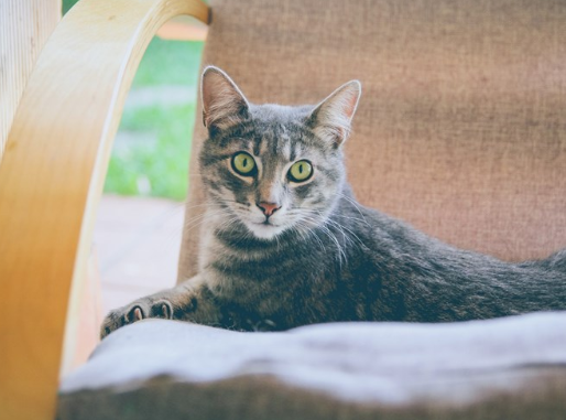 Cat Guardians | Caring for your cat after you've gone| Cats