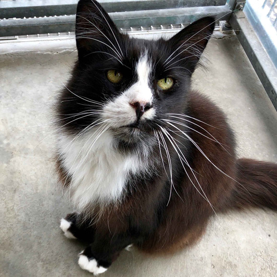 Black and white cat with long whiskers