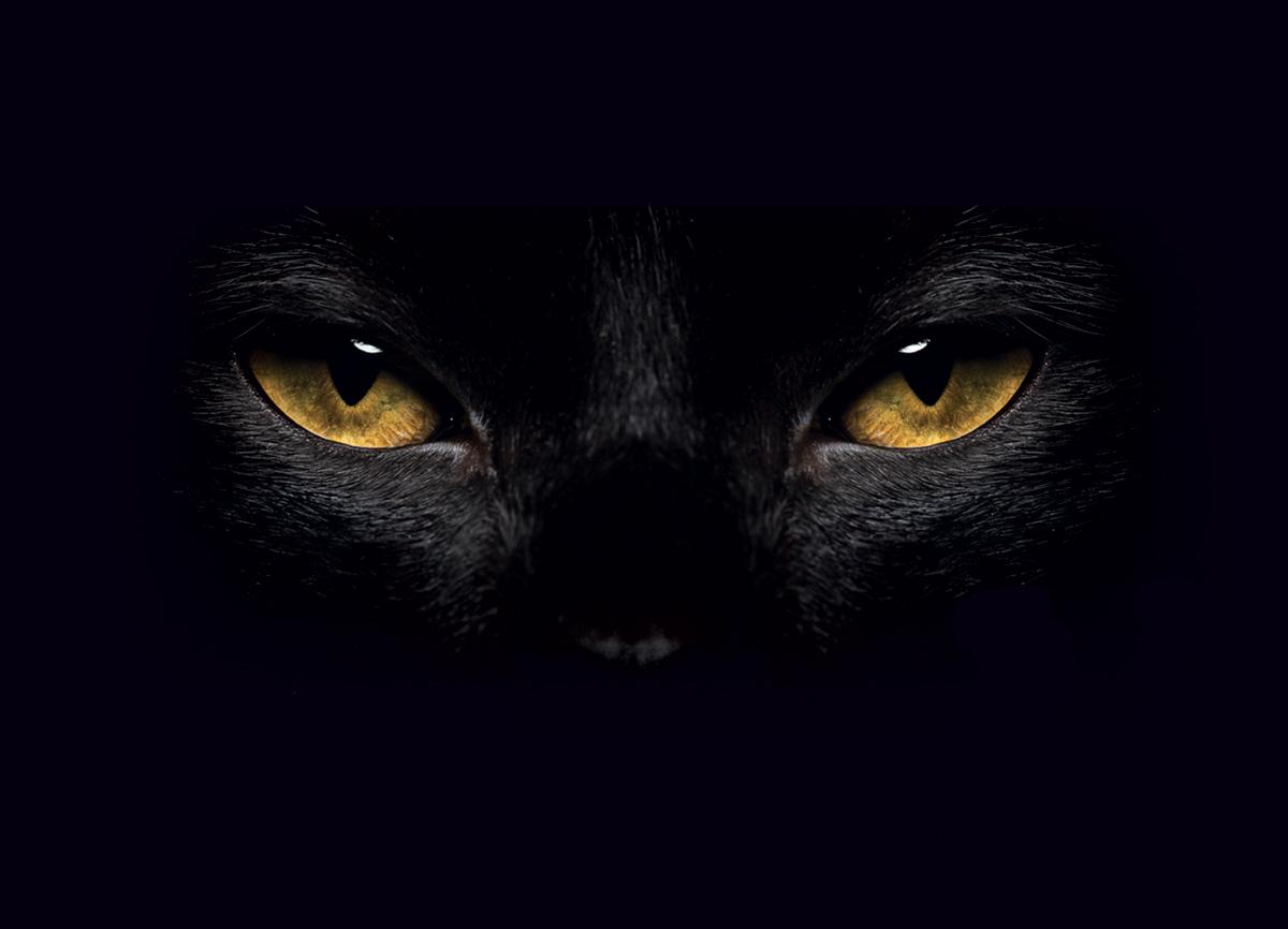 Black Cat Quiz
