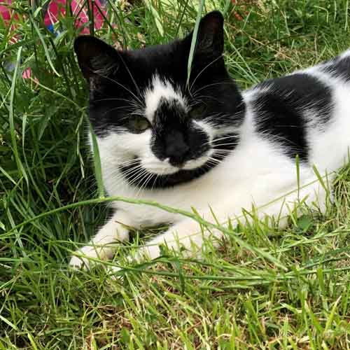 Black-and-white cat sitting in grass