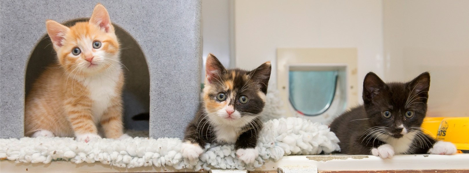 For Vets And Nurses Help Advice Cats Protection