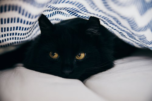 Cats And Fireworks Advice For Cats On Fireworks And Bonfire Night