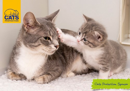 Adopt A Cat Find A Cat To Adopt Cats Protection
