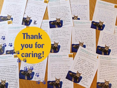 handwritten letters from Cats Protection supporters about their long-stay cat