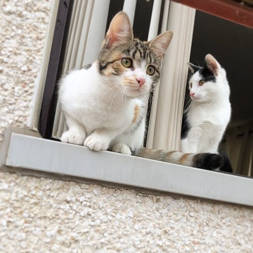 a tabby-and-white and a black-and-white cat sitting on a windowsill