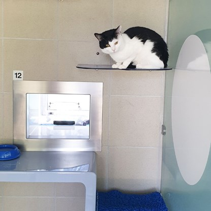 black and white cat sitting on high shelf in Cats Protection pen
