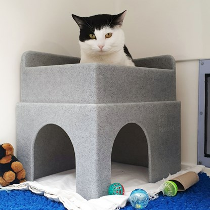 black and white cat sitting on top of cat bed in Cats Protection pen