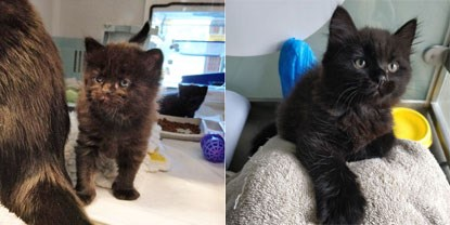 collage of tiny black kitten and older black kitten in cat pen