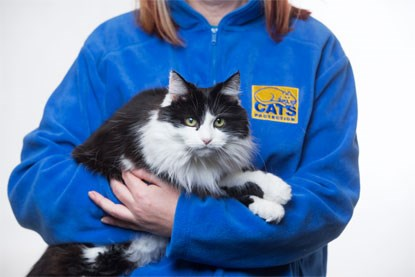 black and white longhaired cat held by woman in Cats Protection fleece
