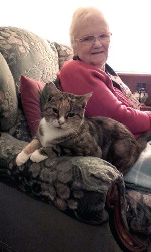 tabby cat sitting on sofa next to elderly woman