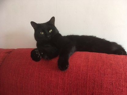 black cat on back of red sofa