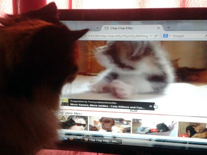 cat watching cat videos online