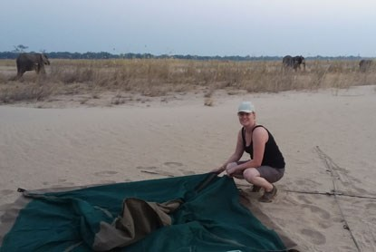 woman setting up a tent with elephants behind her