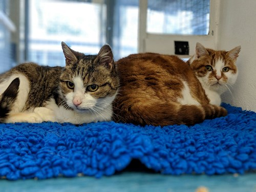 tabby cat and ginger cat in rescue centre pen