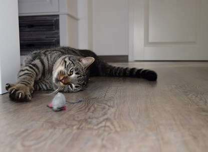 Tabby cat playing with toy mouse
