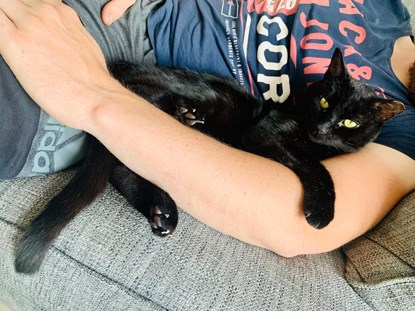 black cat lying in man's arms on grey sofa