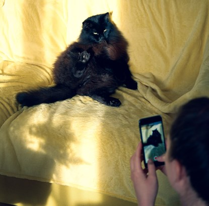 person filming longhaired black cat on yellow sofa with smartphone