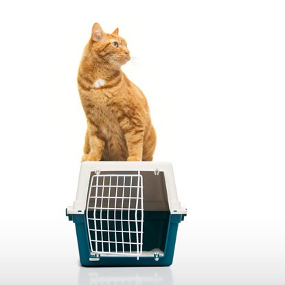 ginger cat sitting on top of enclosed cat carrier