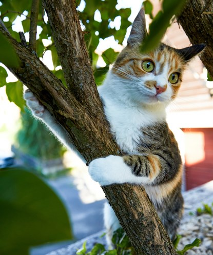 tabby and white cat holding on to tree trunk