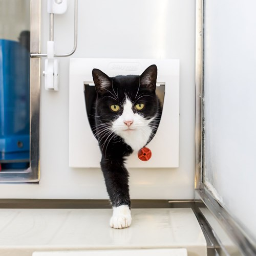 black and white cat going through cat flap