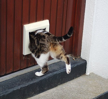 tabby and white cat going through cat flap