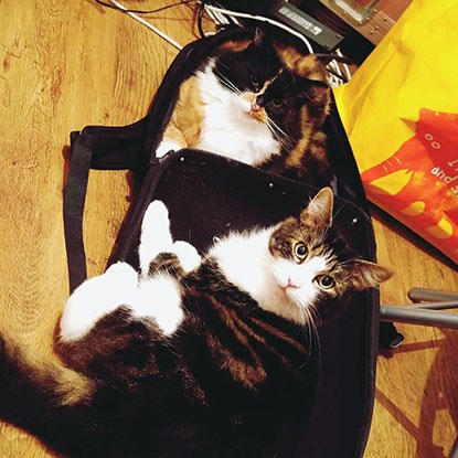 tabby cat and calico cat in suitcase
